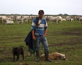 """Önkéntesek bevonásával elindult a """"pásztor-helpdesk"""""""