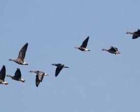 Ritka vonuló madarak a Fekete-réten