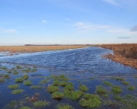 A legelőtavak szerepe a tájgazdálkodás új kihívásainak tükrében